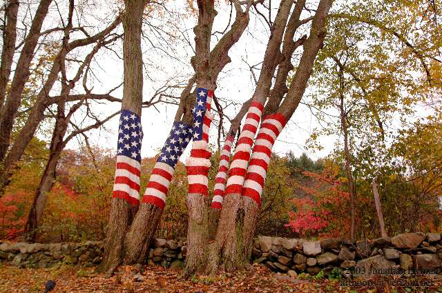 Flag trees in Connecticut.  Photograph by Jonathan Hyman.
